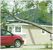 roof tree damage