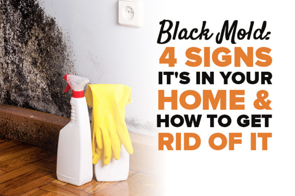 image of how to get rid of black mold
